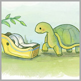 Tortoise Illustrations